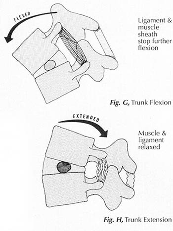 Fig. B Neutral Spine Posture