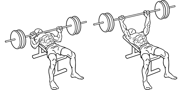 Figure 1. Barbell Bench Press