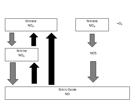 Figure 1: A simple overview of breakdown from nitrate to nitrite.